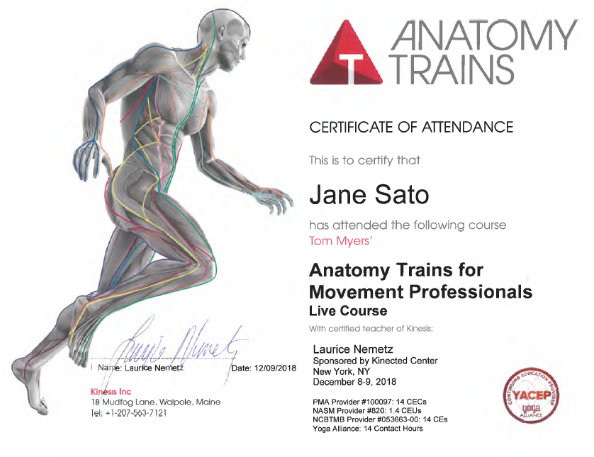anatomy train.png