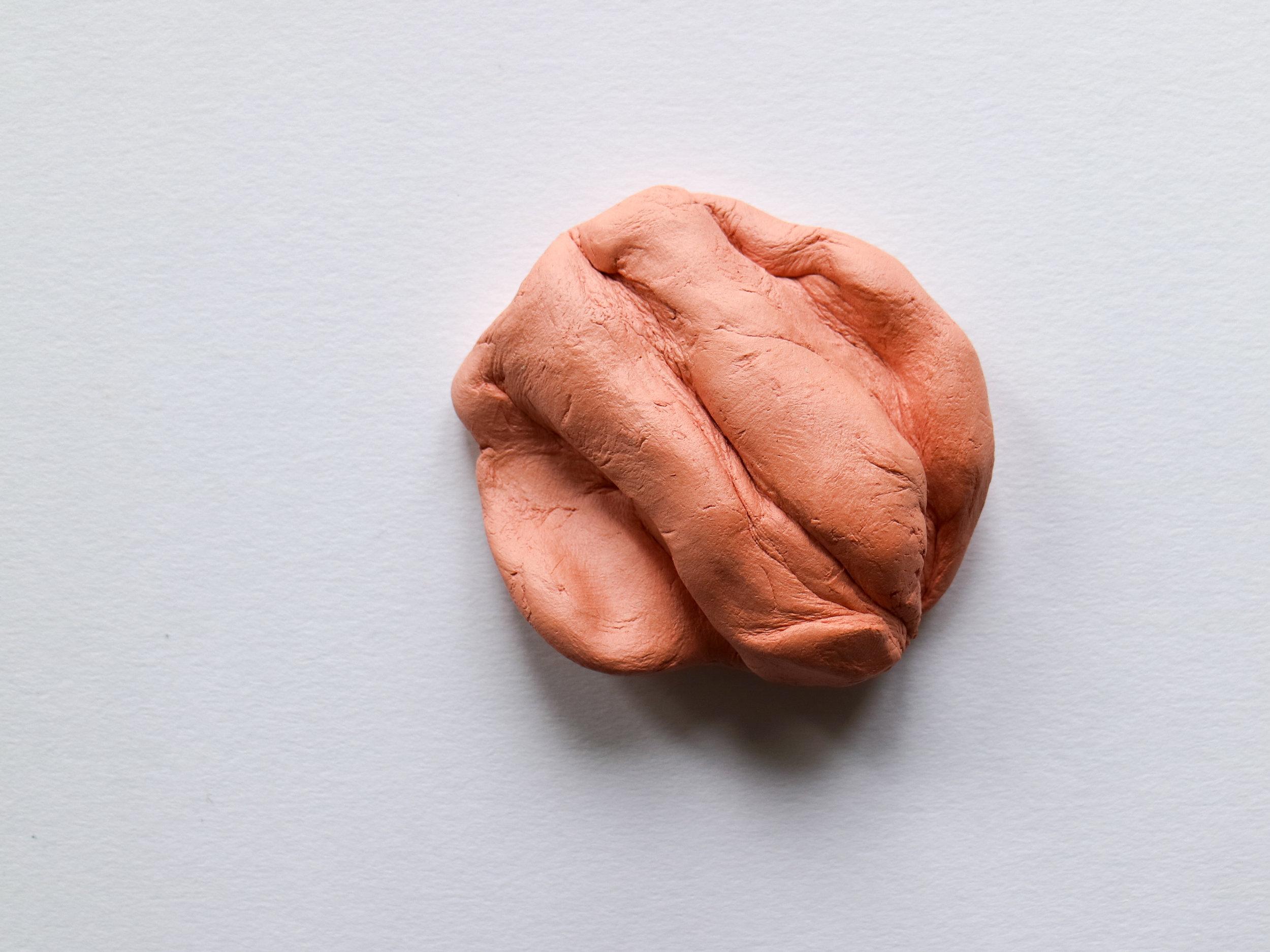 Muscle I-5.jpg