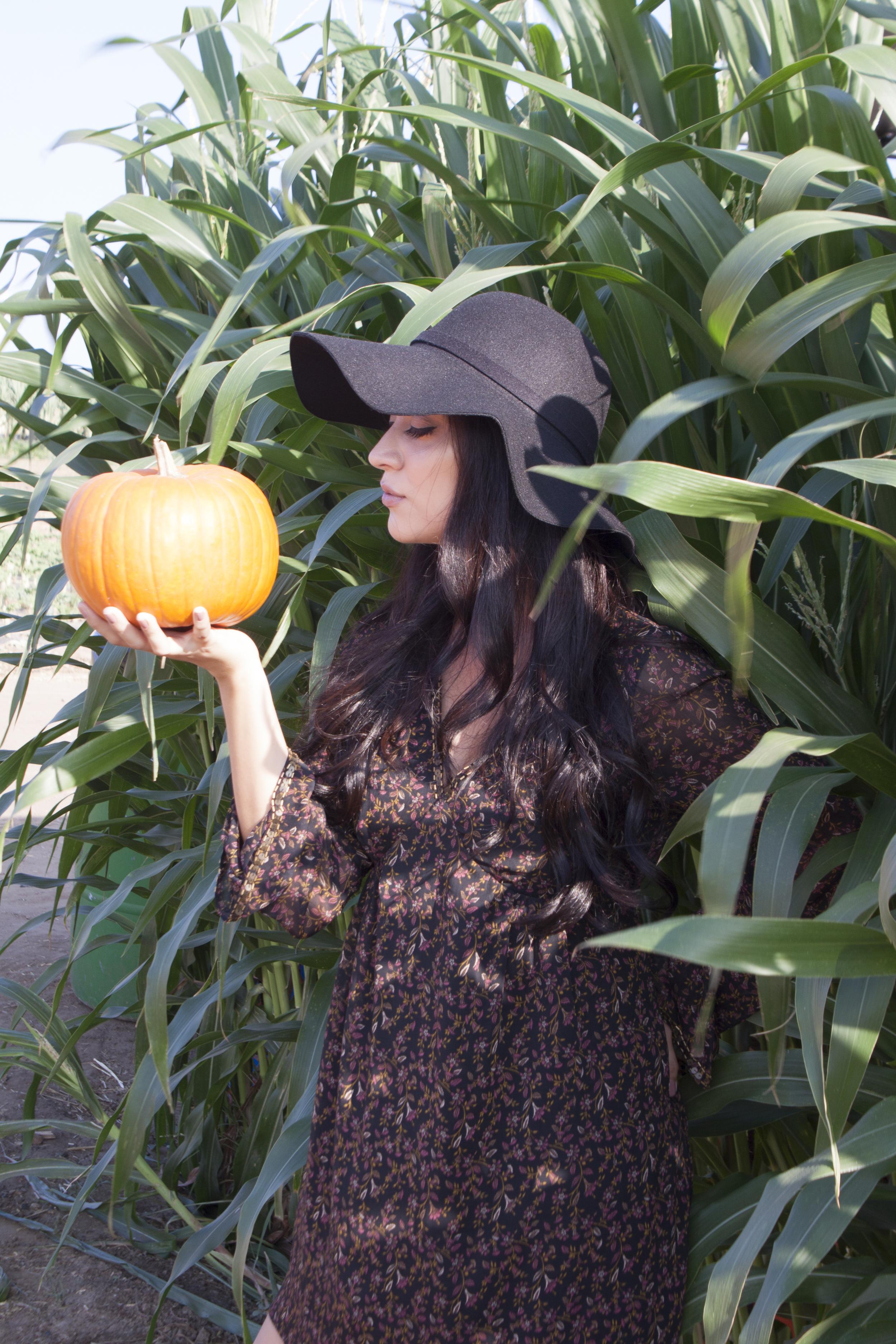 thinking about pumpkin pie 💭