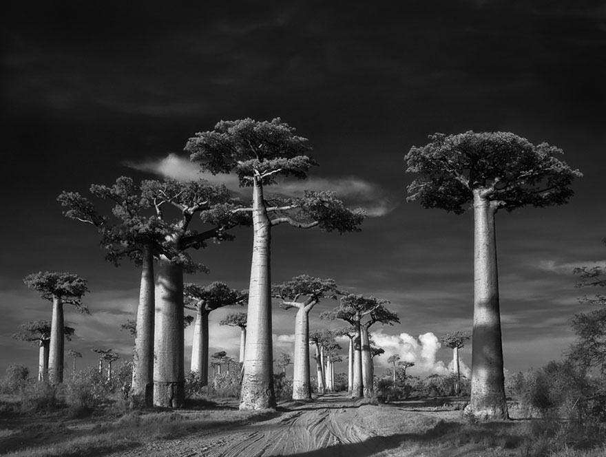 ancient-trees-beth-moon-1.jpg