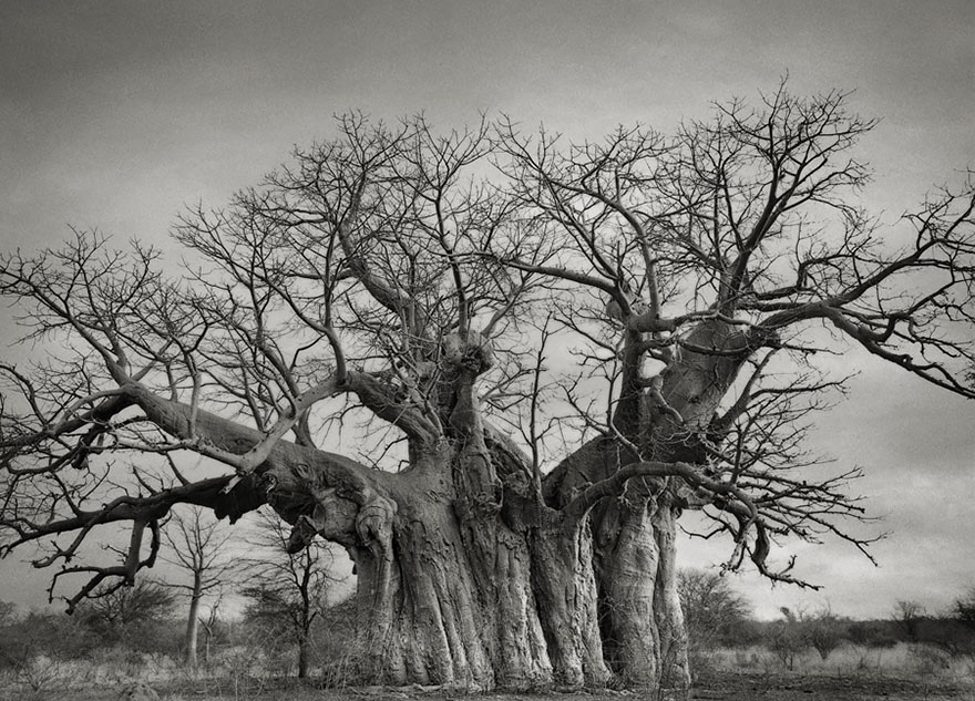ancient-trees-beth-moon-3.jpg