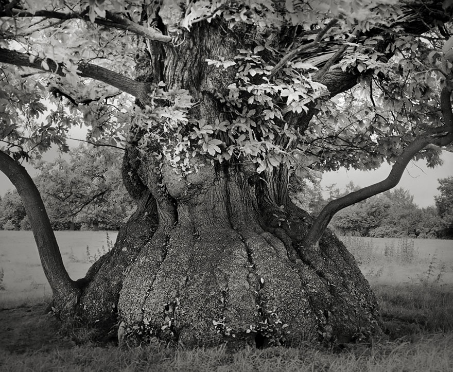 ancient-trees-beth-moon-4.jpg