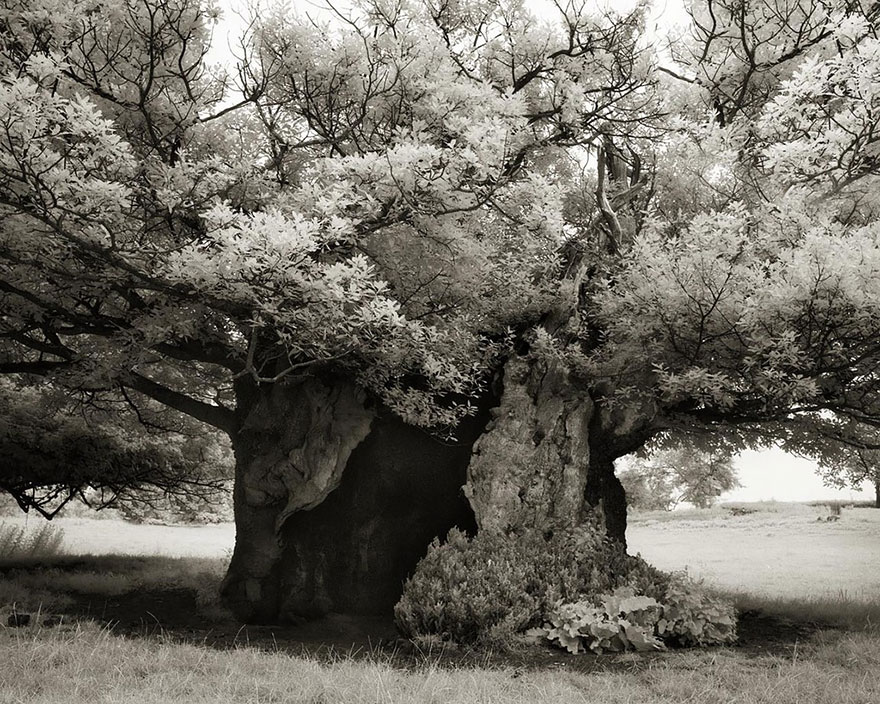 ancient-trees-beth-moon-19.jpg