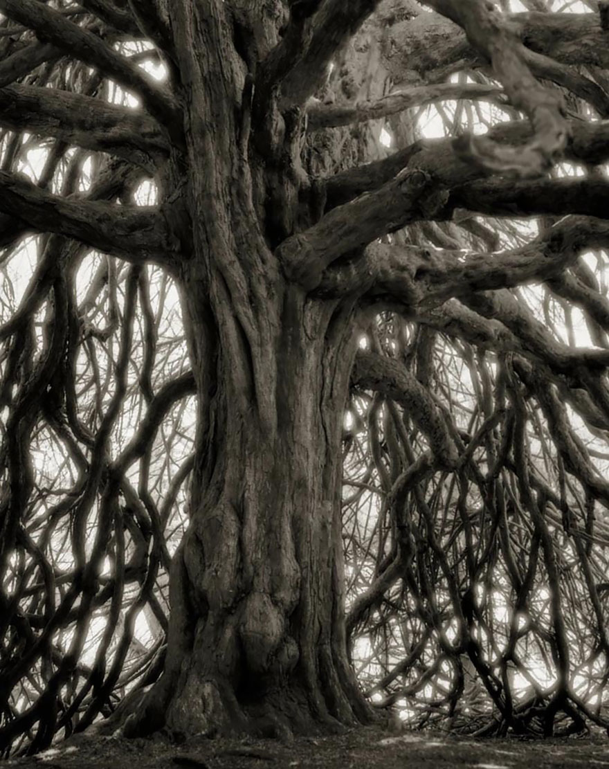 ancient-trees-beth-moon-18.jpg