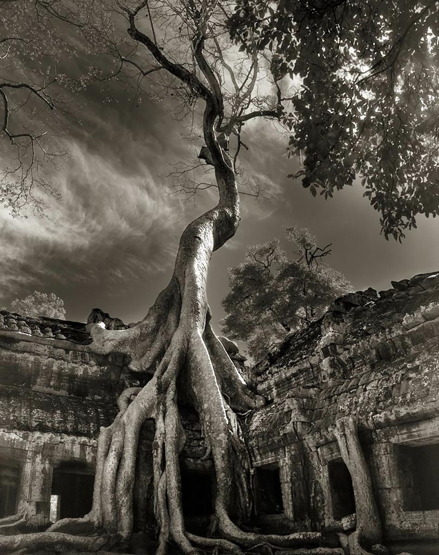 ancient-trees-beth-moon-17.jpg