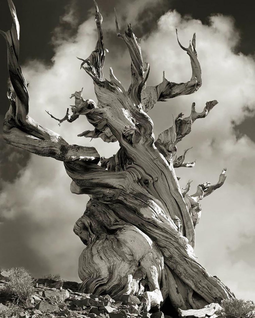 ancient-trees-beth-moon-15-820x1024.jpg