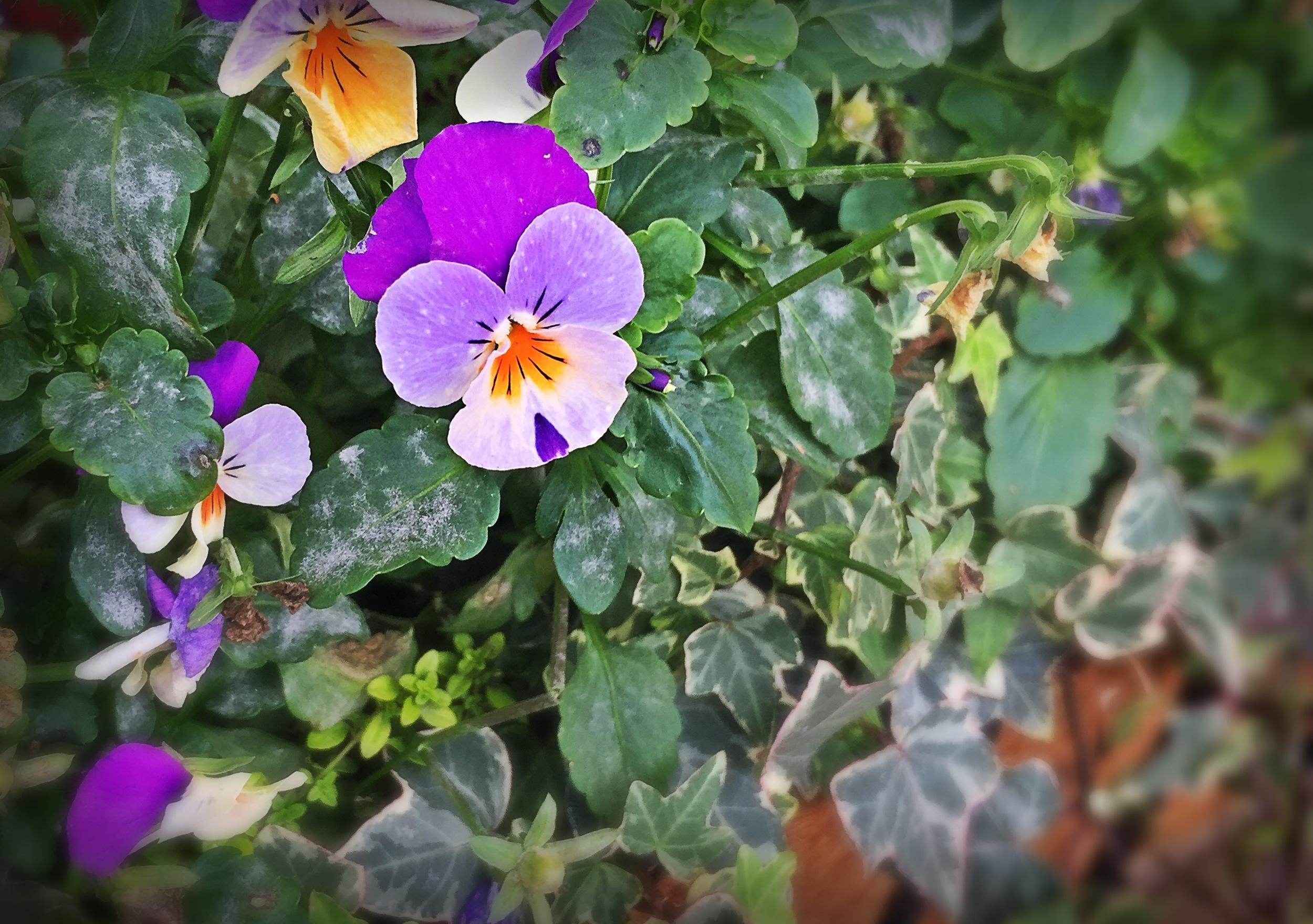 Social Media garden in bloom