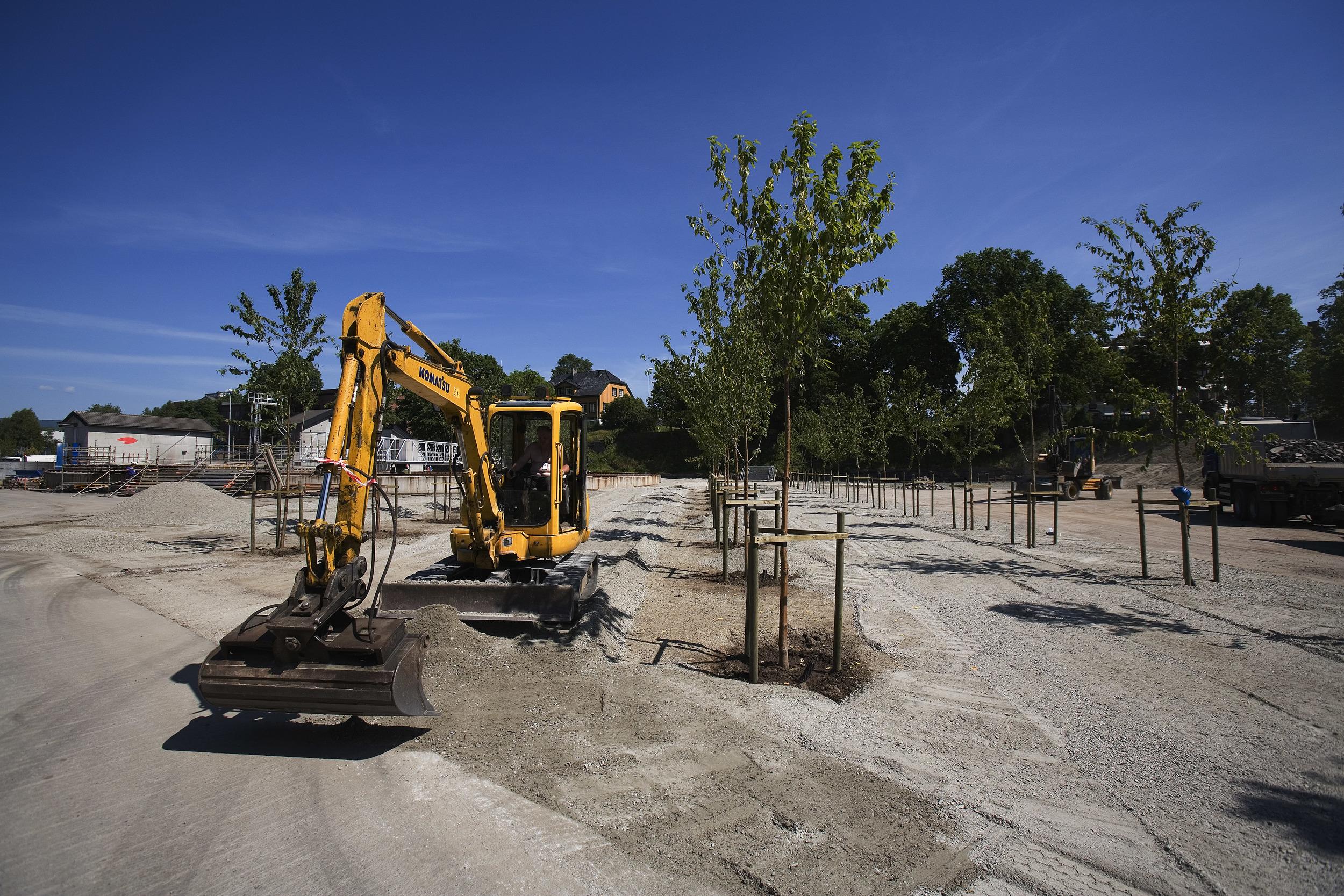 Trær og grus (foto Dag Jenssen)
