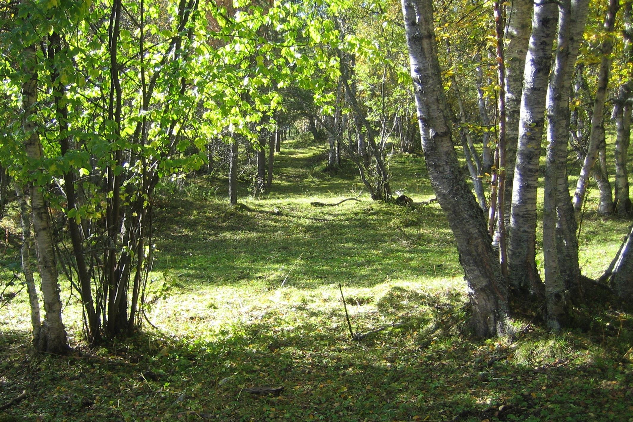 Bjørkehagen
