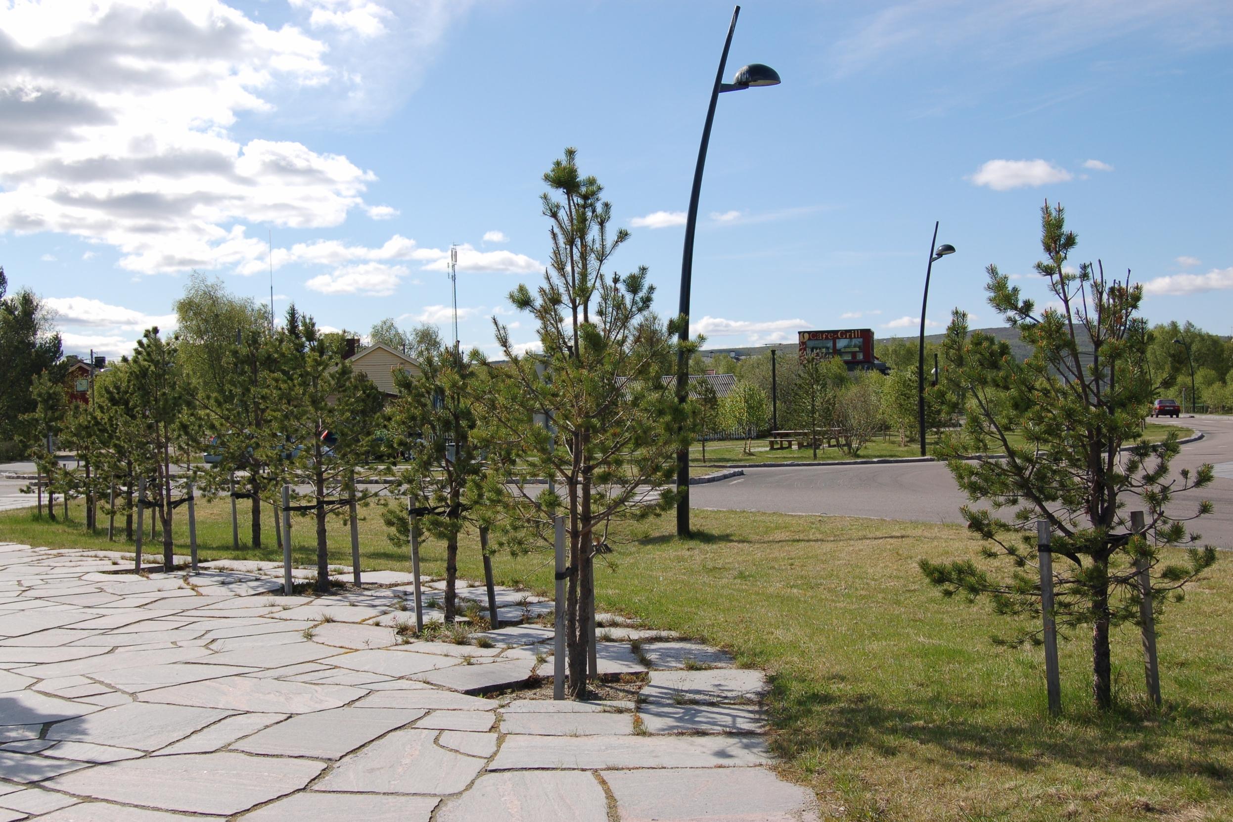 """Furutrær rammer inn og """"holder fast"""" store plasser og næringsbygg og danner grønne overgangssoner mot veger og kryssområder"""