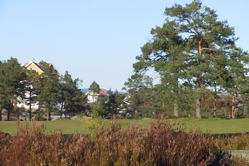 Lyngmark og furuskog gir fine rammer til golfanlegget