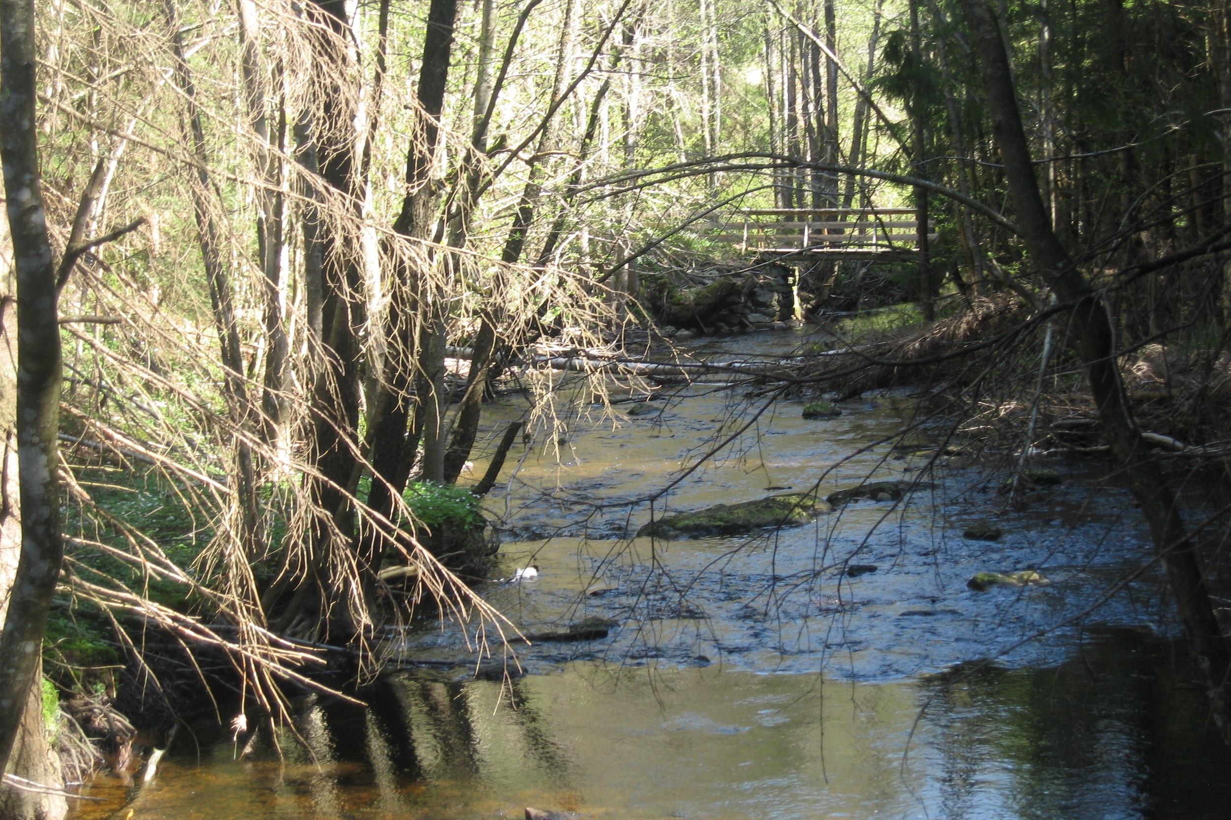 Bekkedrag og elvestryk gir opplevelser og lyden av vann