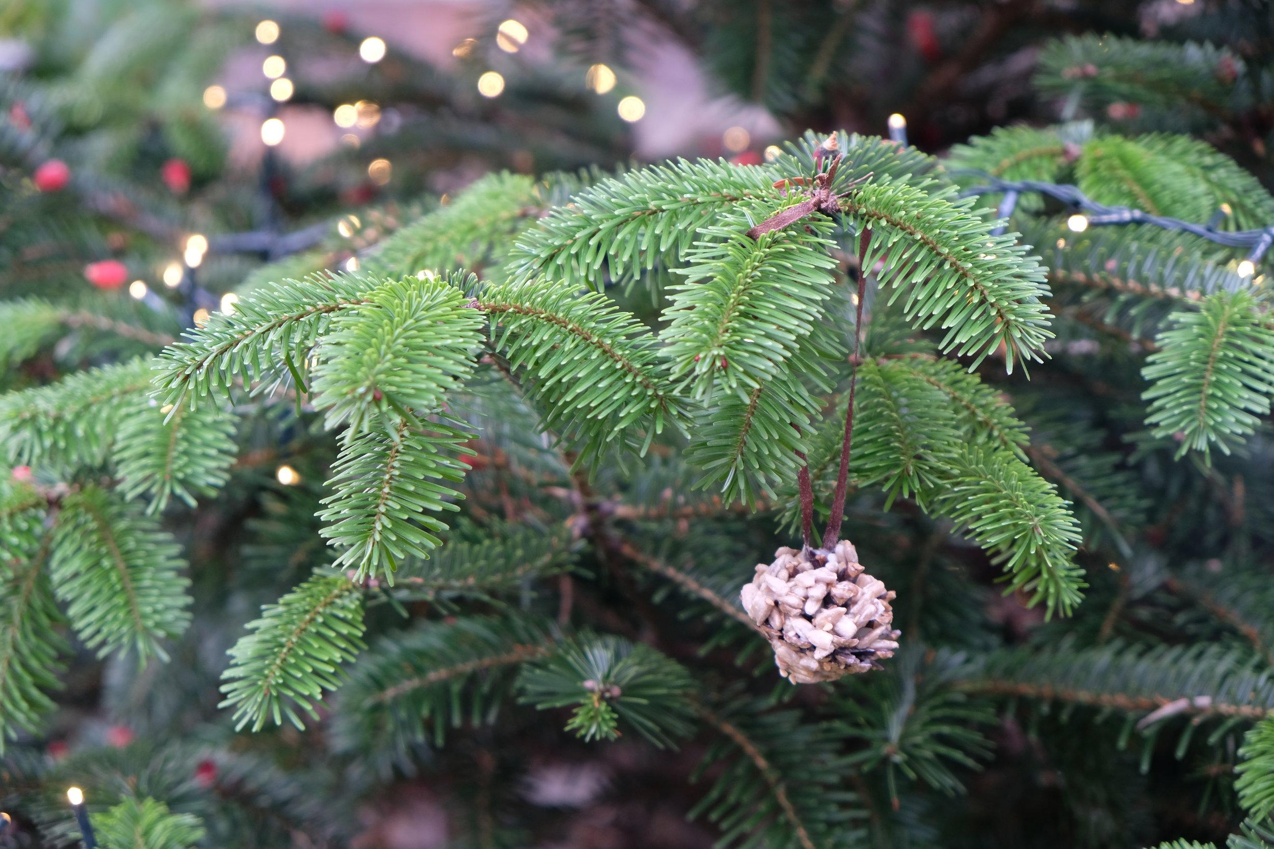 Christmas Tree Living.A Christmas Tree For Living Things Diy Bird Feeders