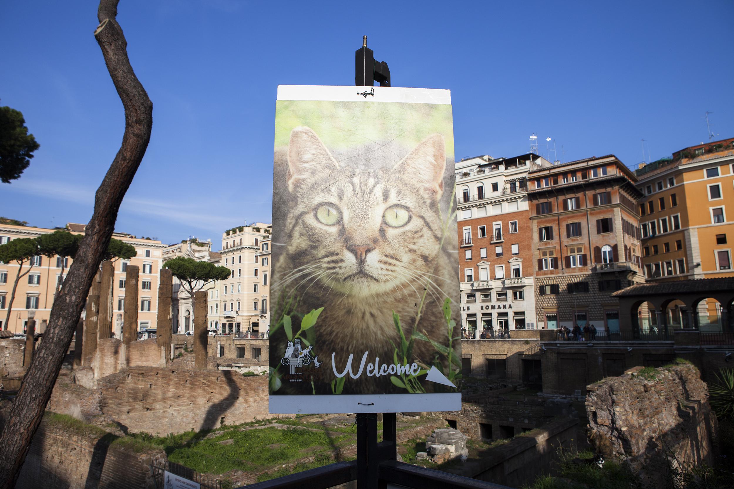 Torre Argentina     Cat Shelter - Rome