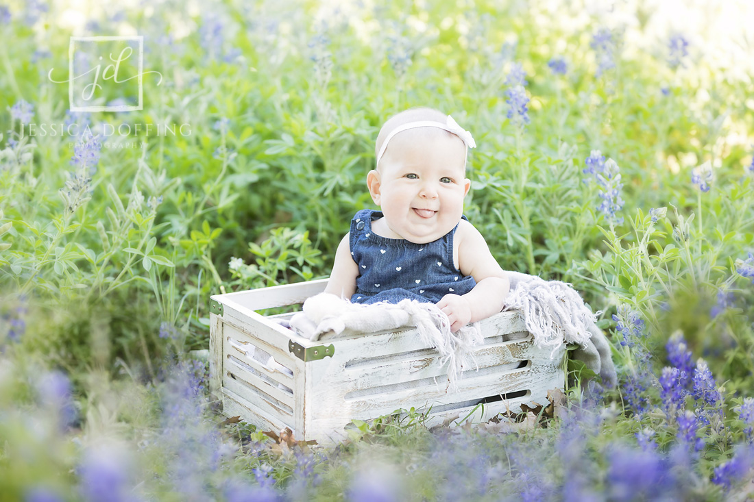 baby girl in box bluebonnets