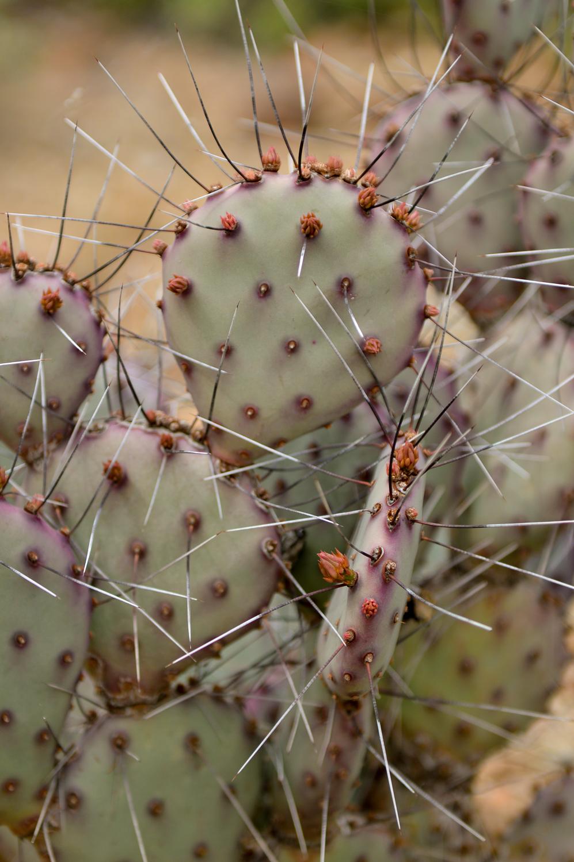 Tucson 2019 (21 of 94).jpg