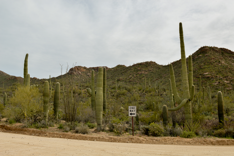Tucson 2019 (33 of 94).jpg