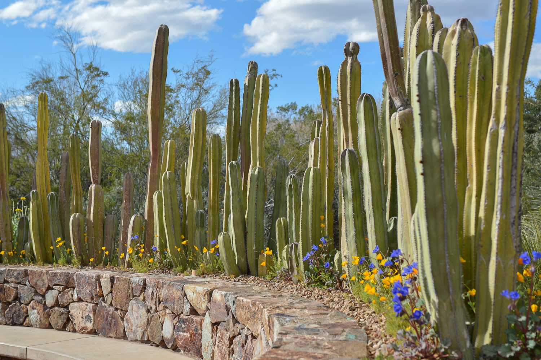 Tucson 2019 (81 of 94).jpg