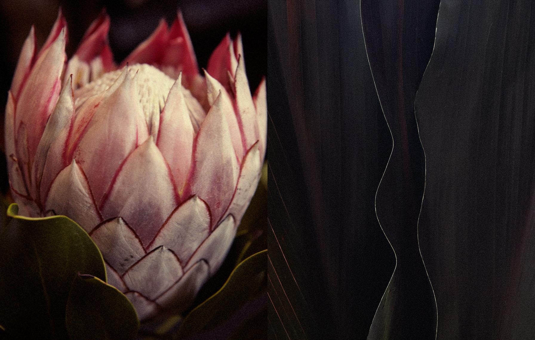 tropical flowers_pair 1.jpg