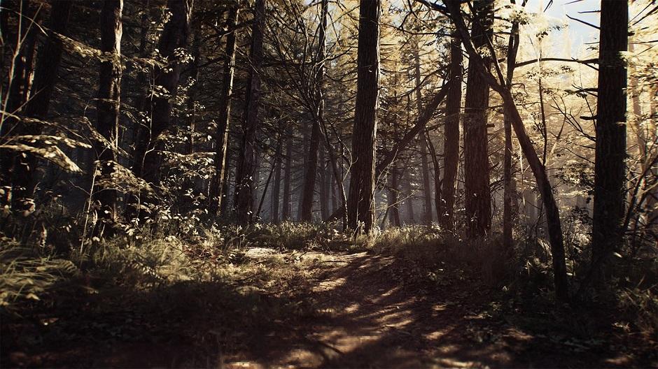 blair-witch-woods.jpg