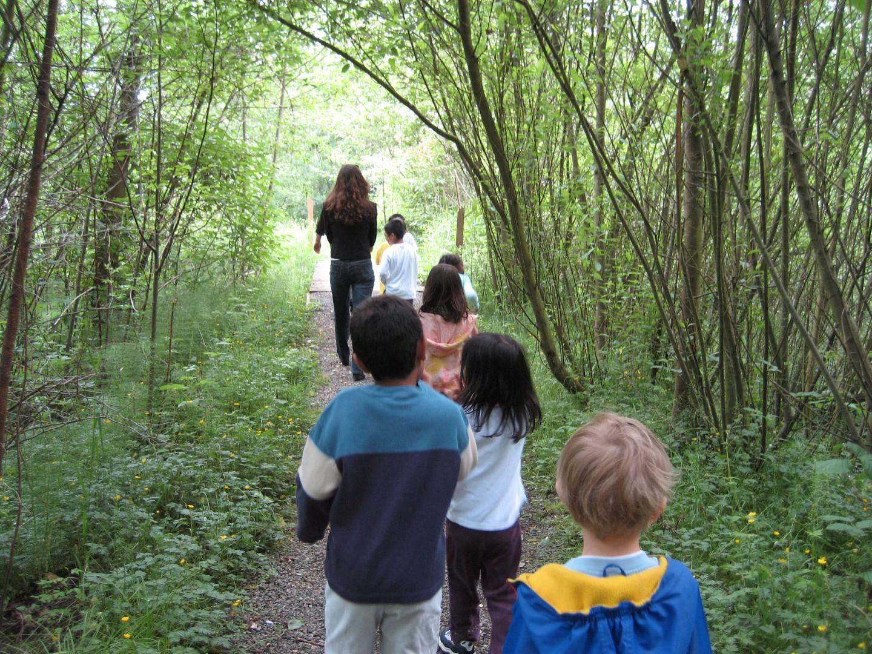 nature walk (Large).jpg