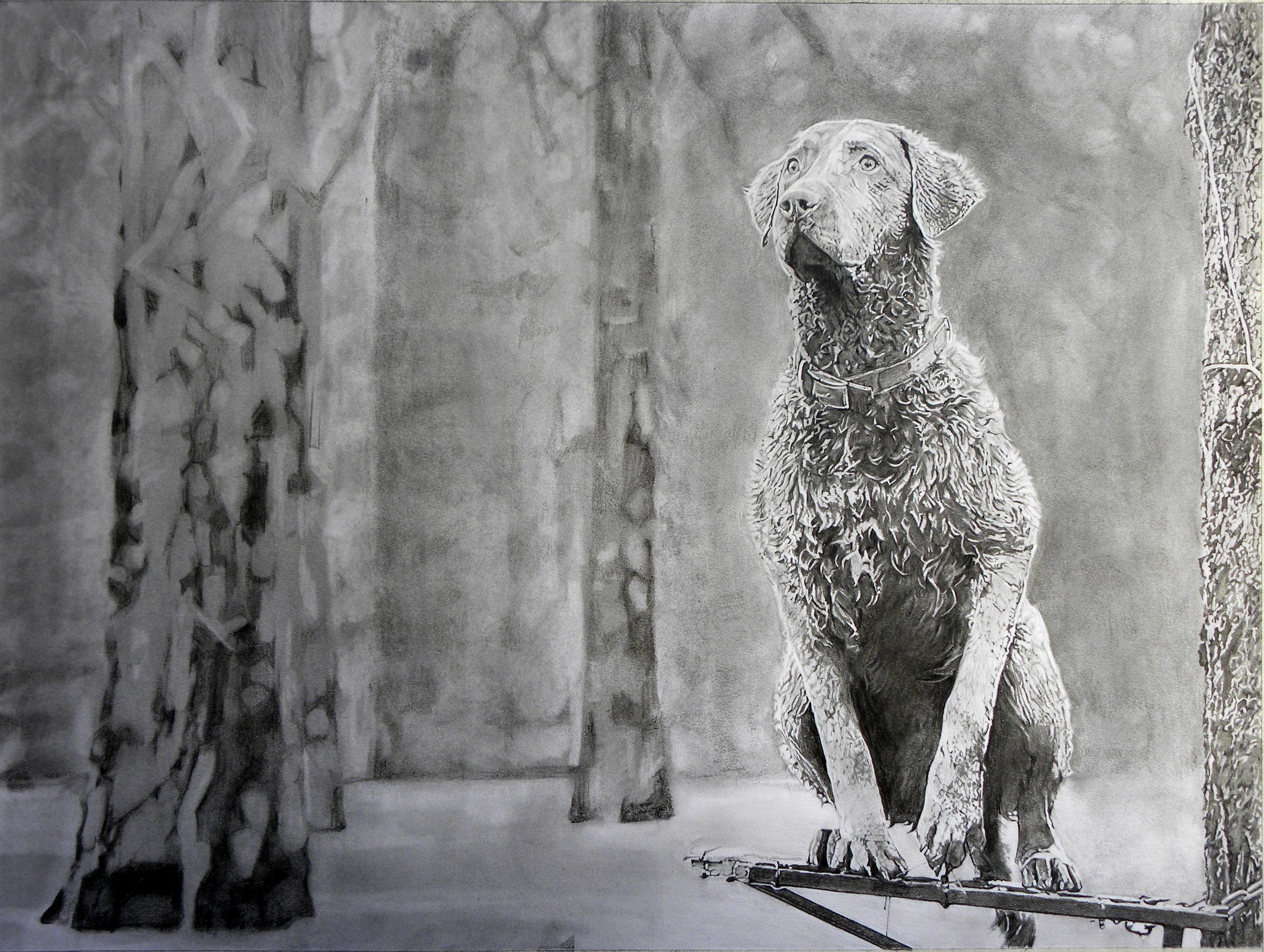 "Chesapeake Bay Retriever Hunting Dog, 18""x24"""