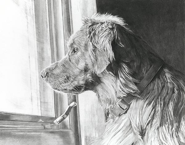 "11""x14"" charcoal dog drawing"