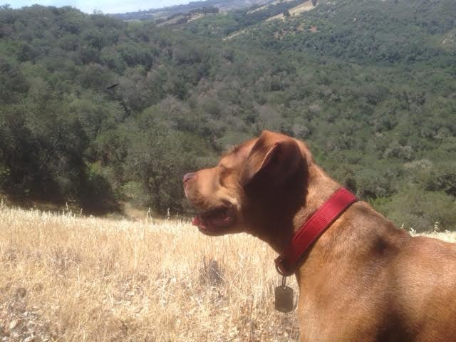 Iris enjoying the view in Paso Robles countryside   Martin Pierce Hardware  Los Angeles CA