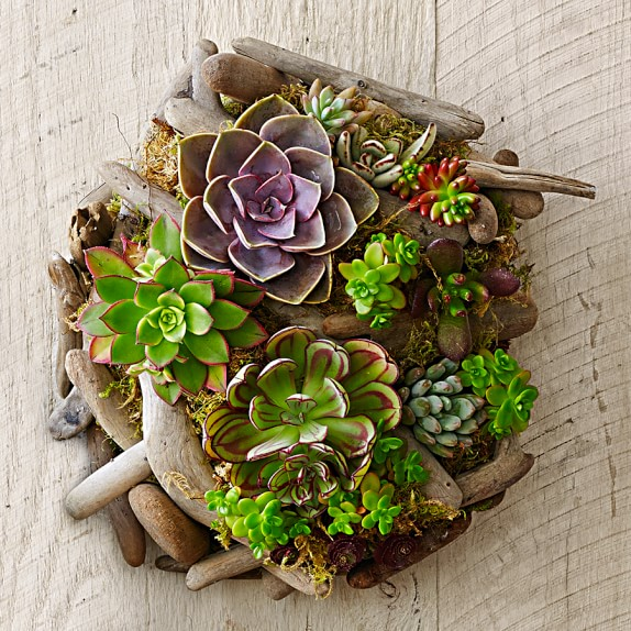 Succulent wall garden from  Williams-sonoma