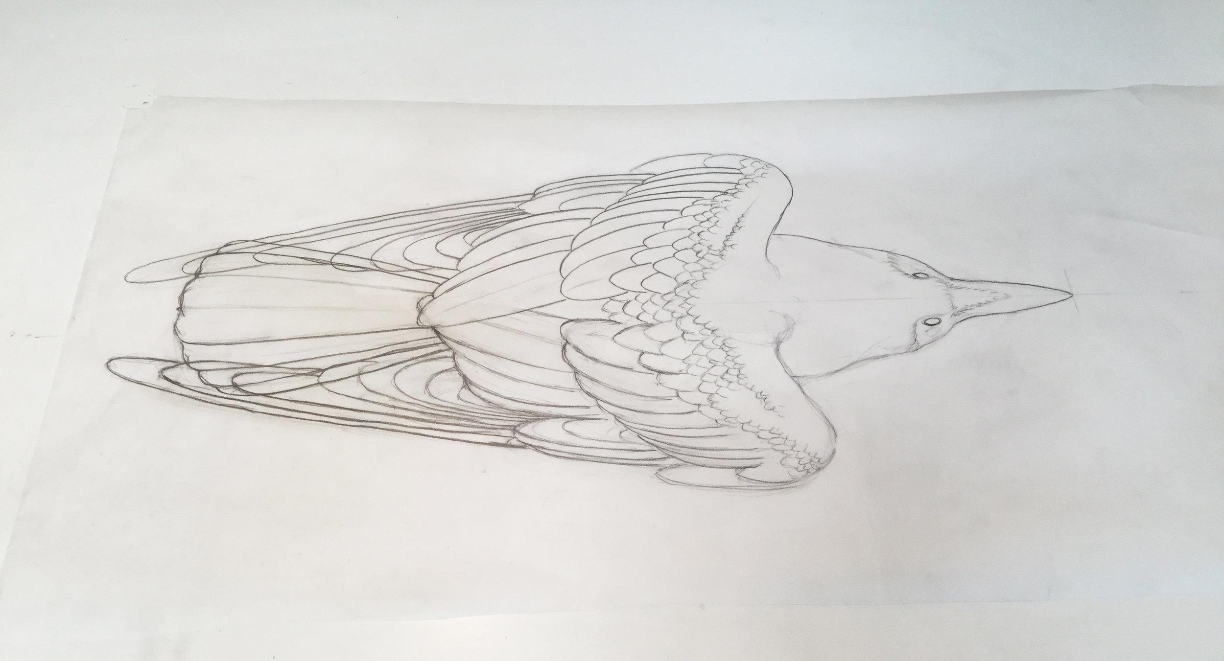 Plan View of Raven Design