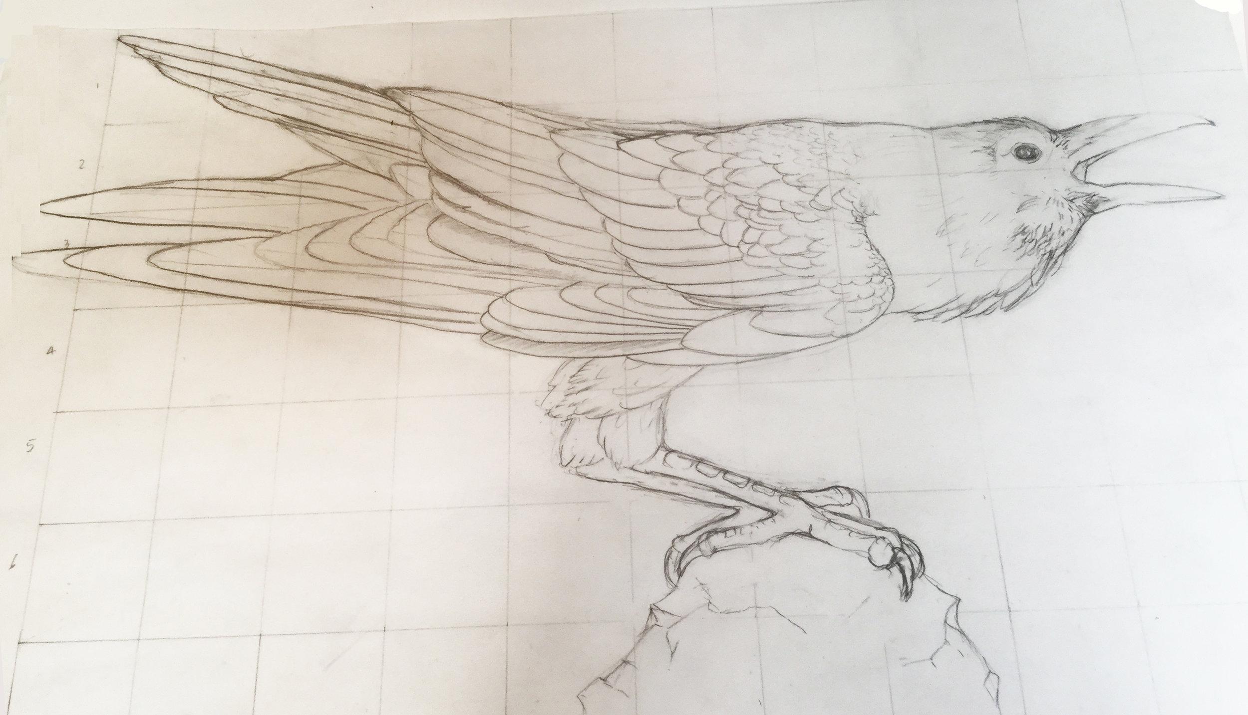 Profile of Raven design