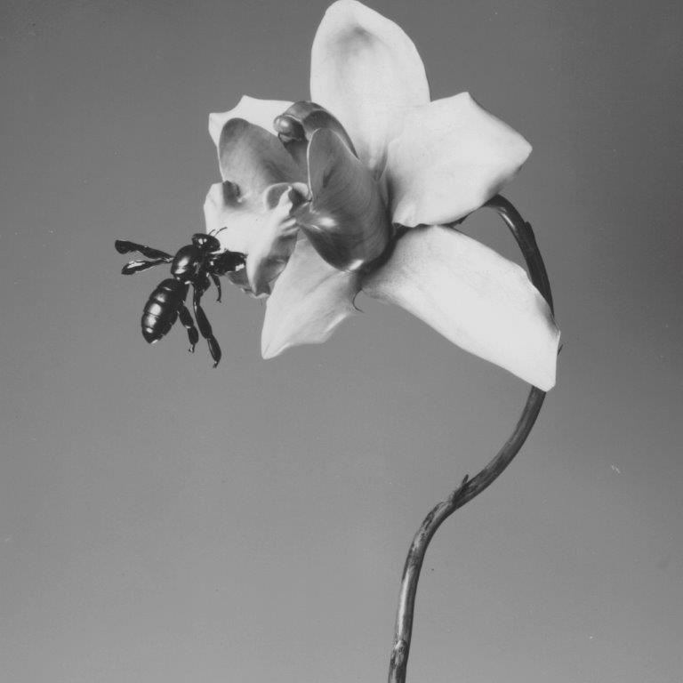 Orchid and Black Bee square.jpg