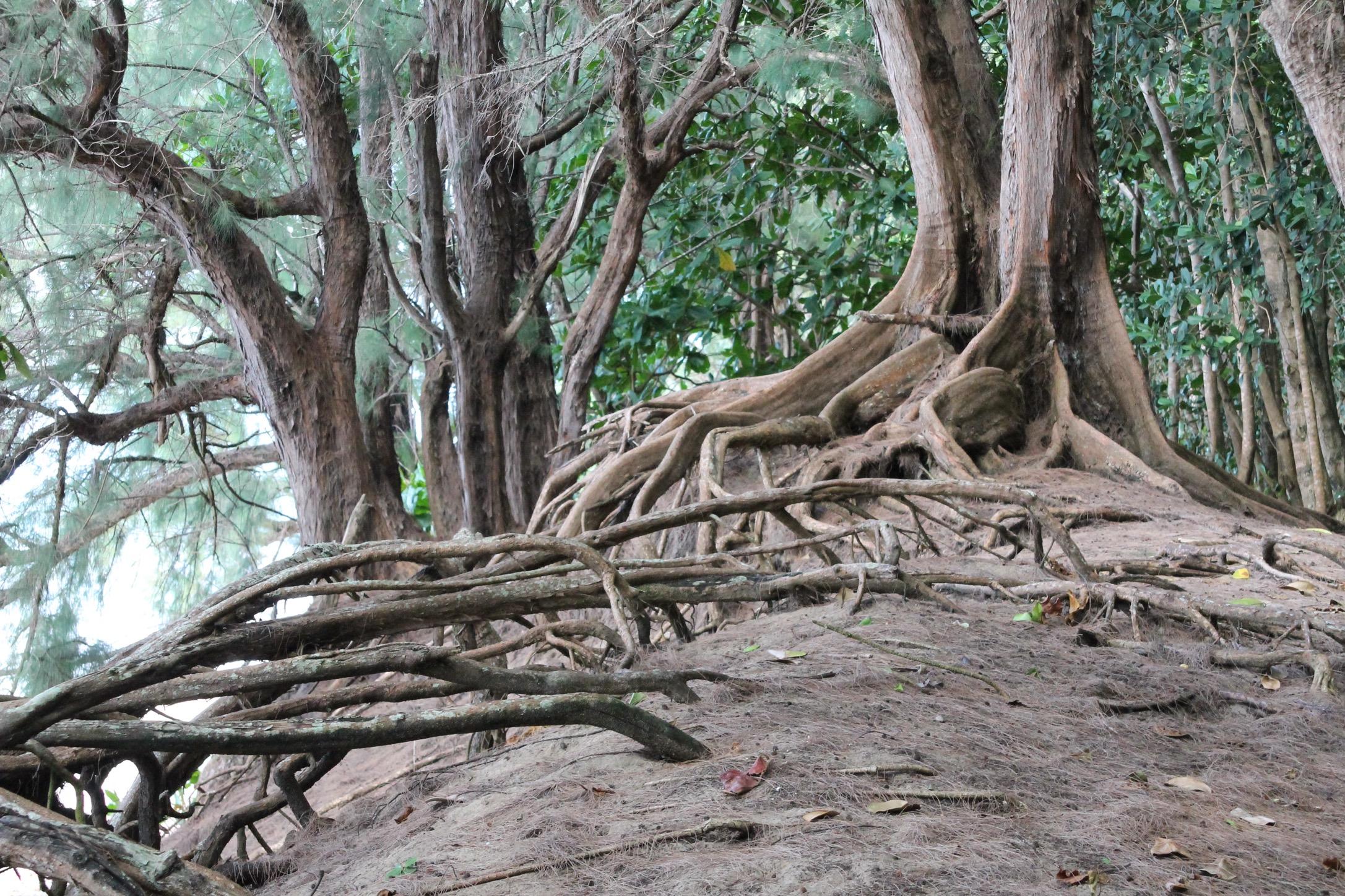 Roots 2.jpg
