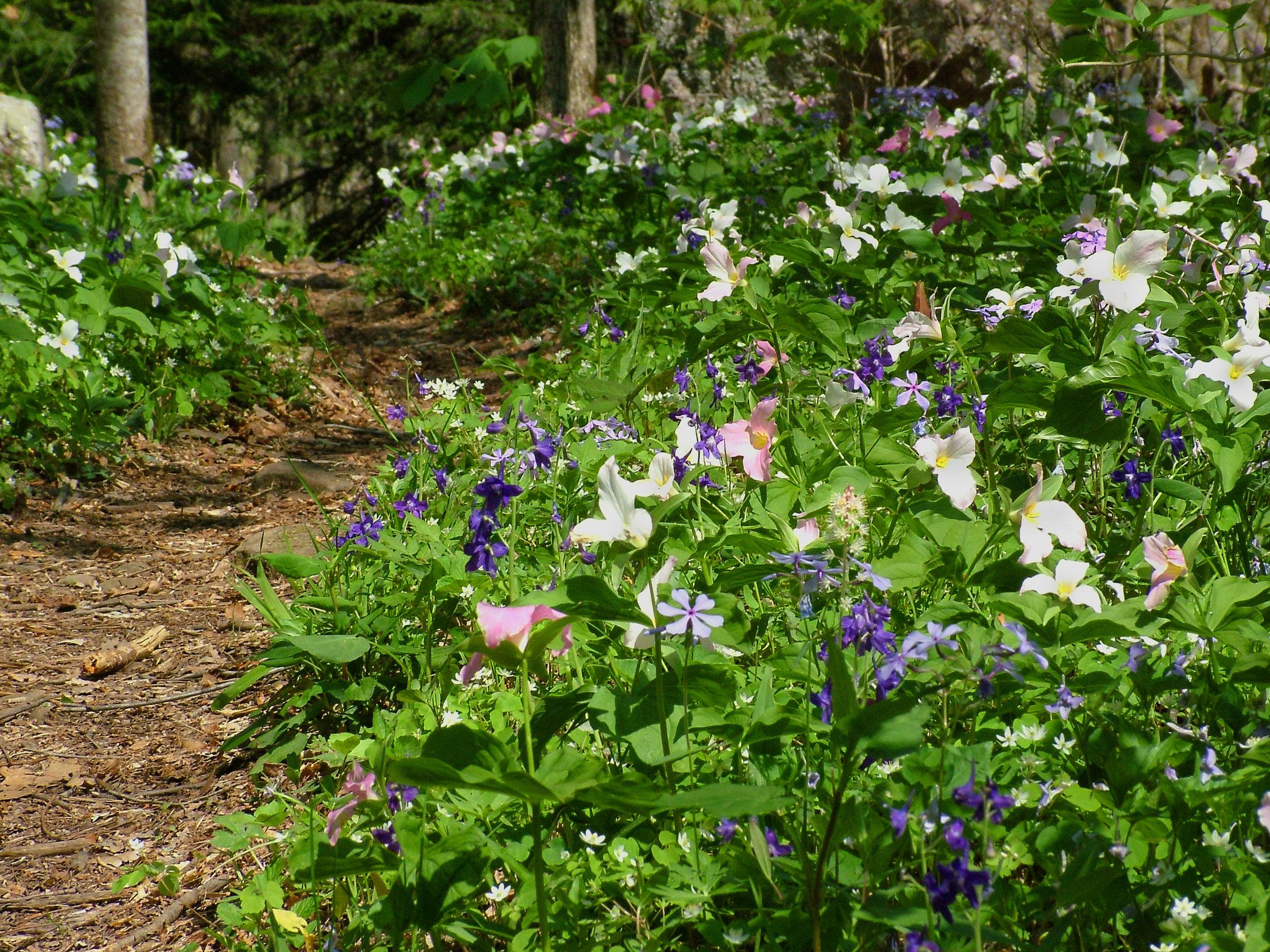 SouthCumberland-CollinsGulfWildflowers.jpg