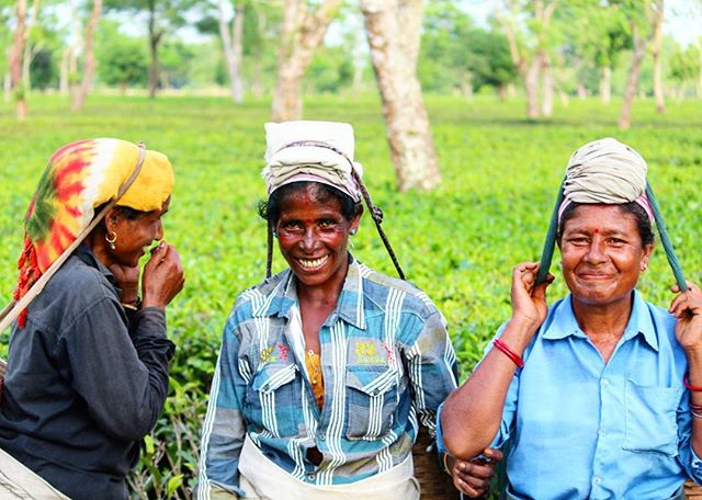 Meet Anima, Panchami & Bharti - they are an integral part of our workforce. Our pluckers are our biggest asset and the main reason we get to sip some of the finest teas. Majority of the pluckers in the #tea industry are #women and we respect them and stand to empower them daily!  #IWD2016♀ #WomenEmpowerment #PledgeForParity #WomenOfTea #MakeInIndia #Assam #GhograjanTeaEstate
