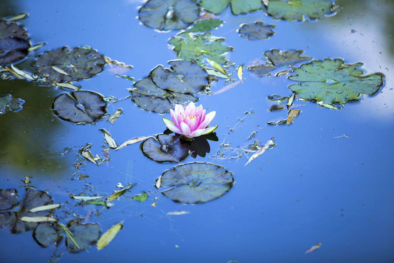 r_MG_6974_France_Monets Garden.jpg