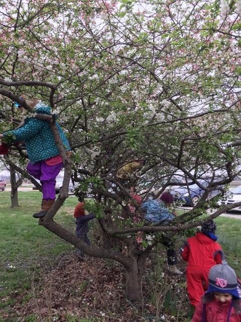 EC tree climb.jpeg