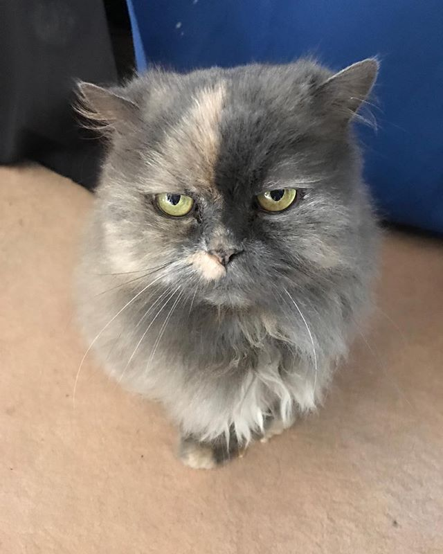 Smitten the wonder kitten, 16 years and going strong!