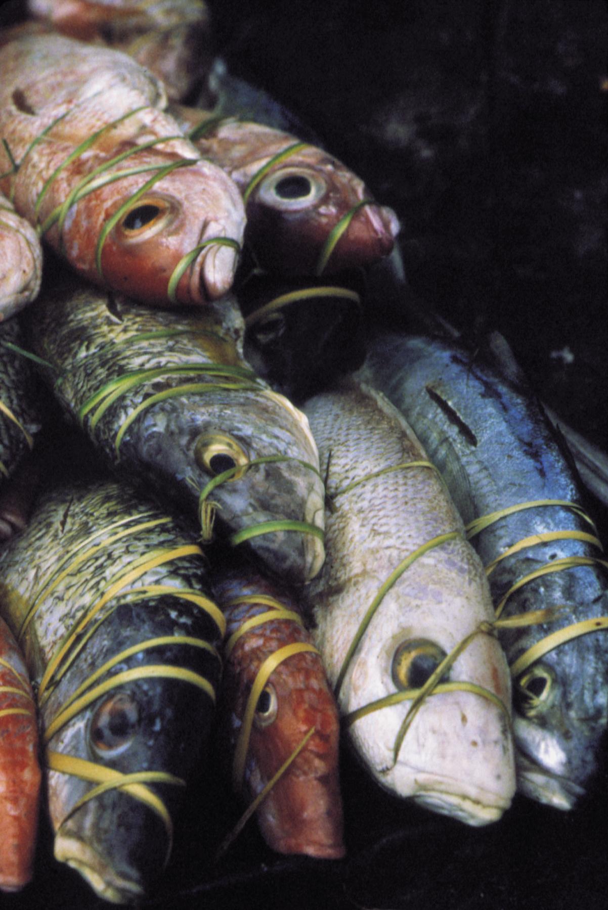29 colorful fish copy.jpg