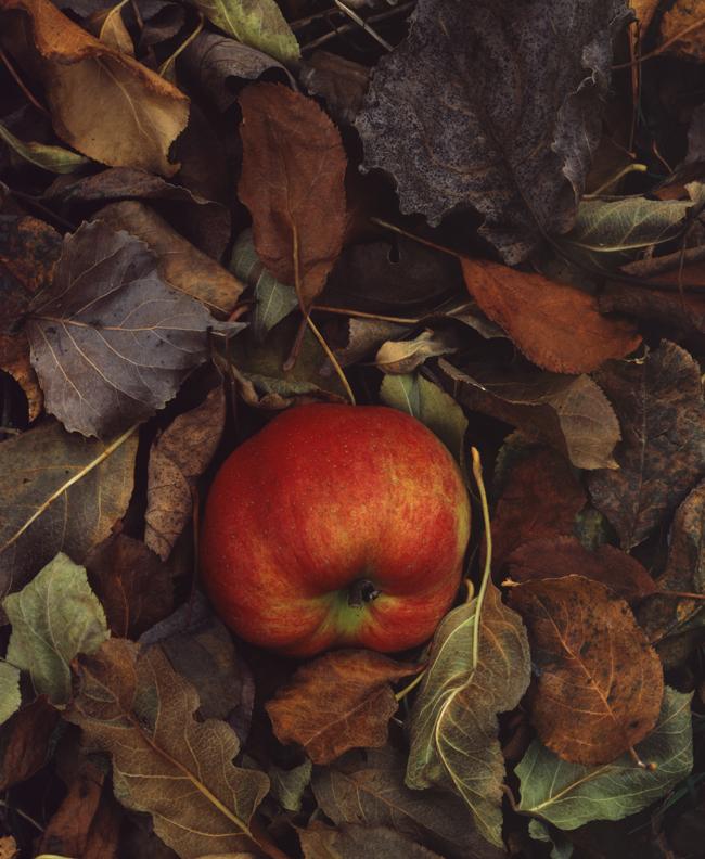 Fallen Apples_hires.jpg
