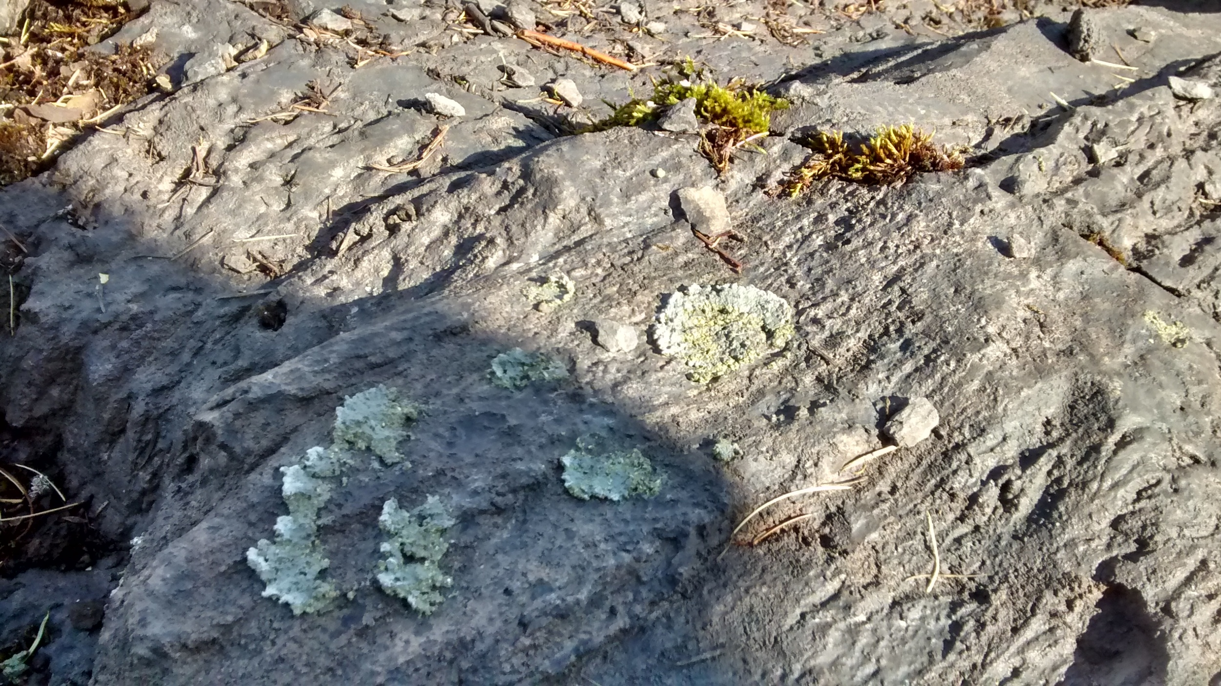 Details will make a piece convincingly real. Notice the color and texture of the faux lichen.