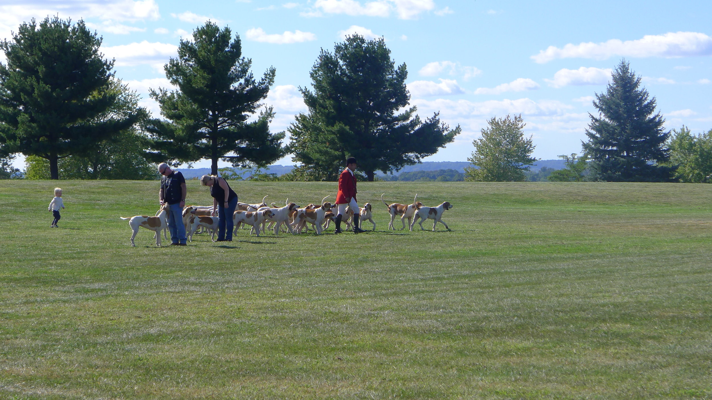 The hounds get set to run