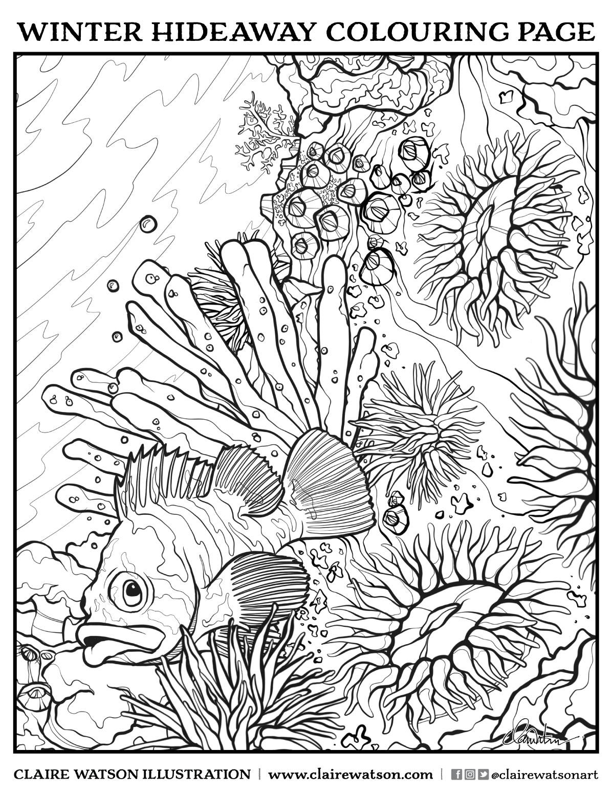 colourpage_rockfish_72dpiWEB.jpg