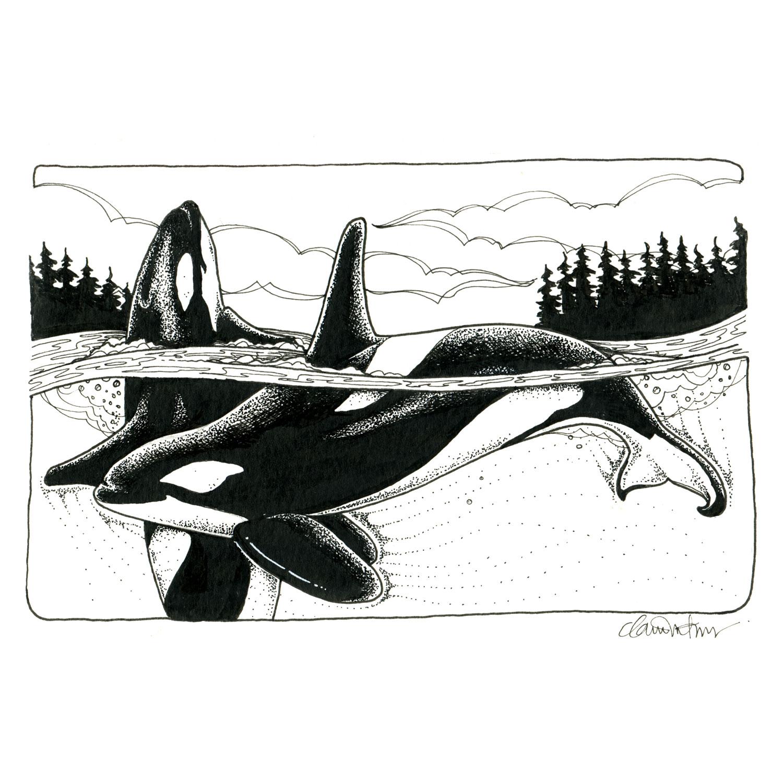 orcas_bw_72dpiWEB 2.JPG