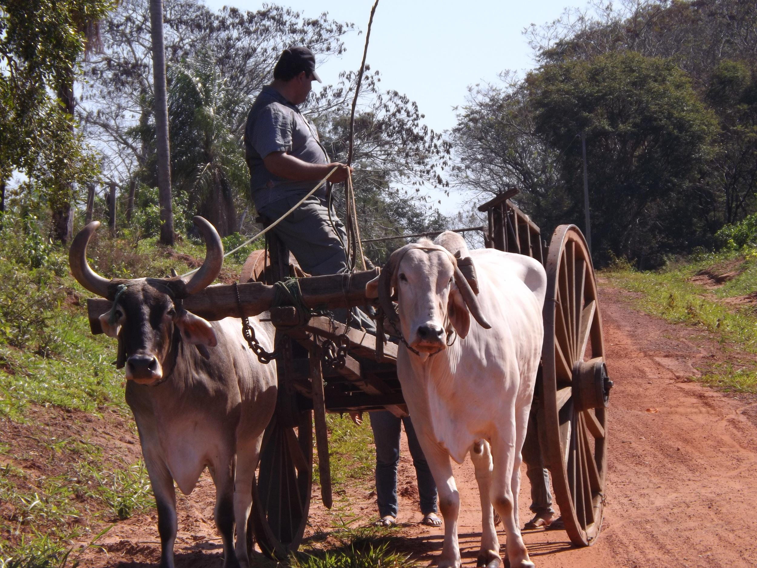 Ox cart Arroyito (1).JPG