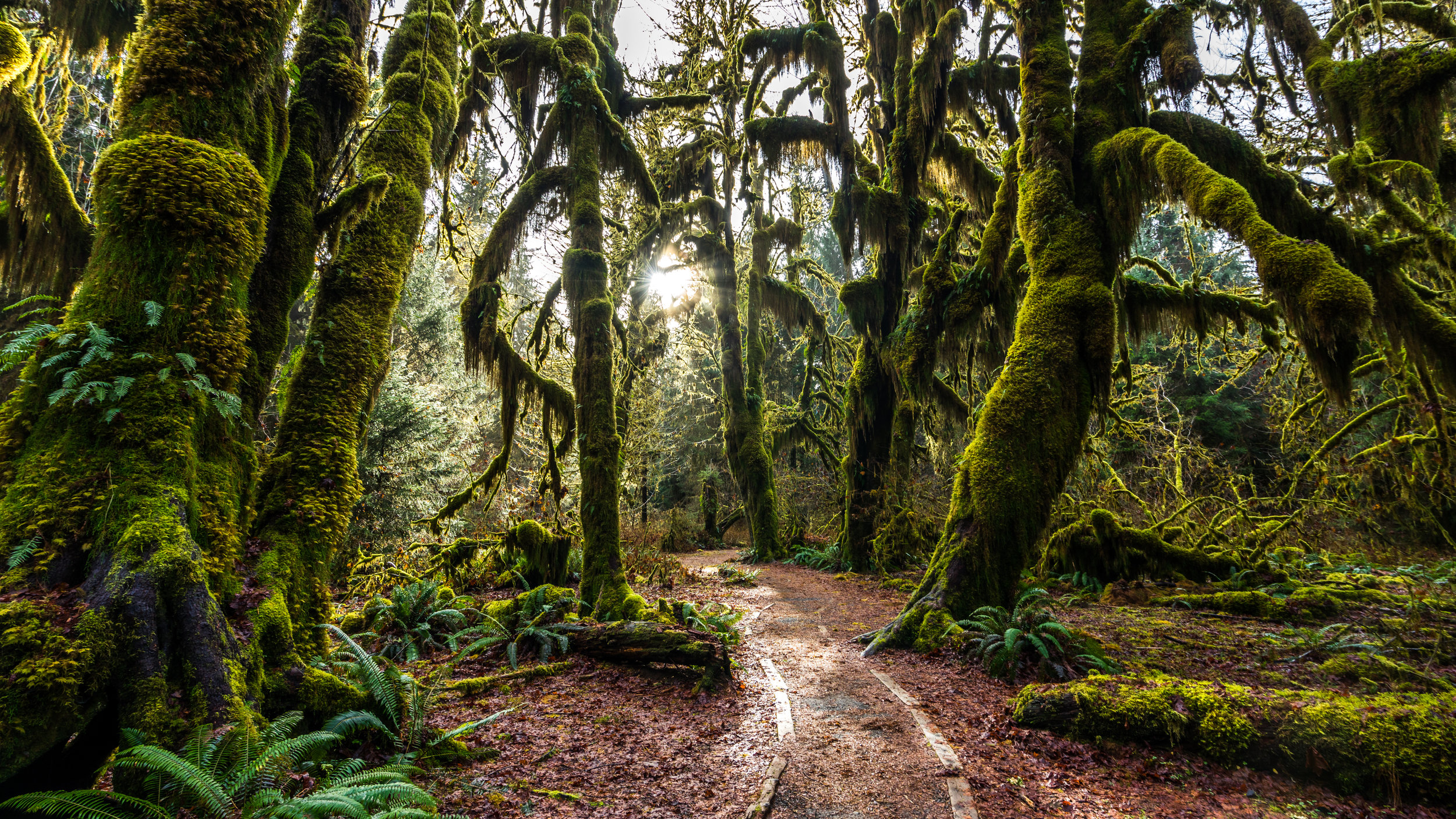 A ski tour through Olympic National Park will take you from this...