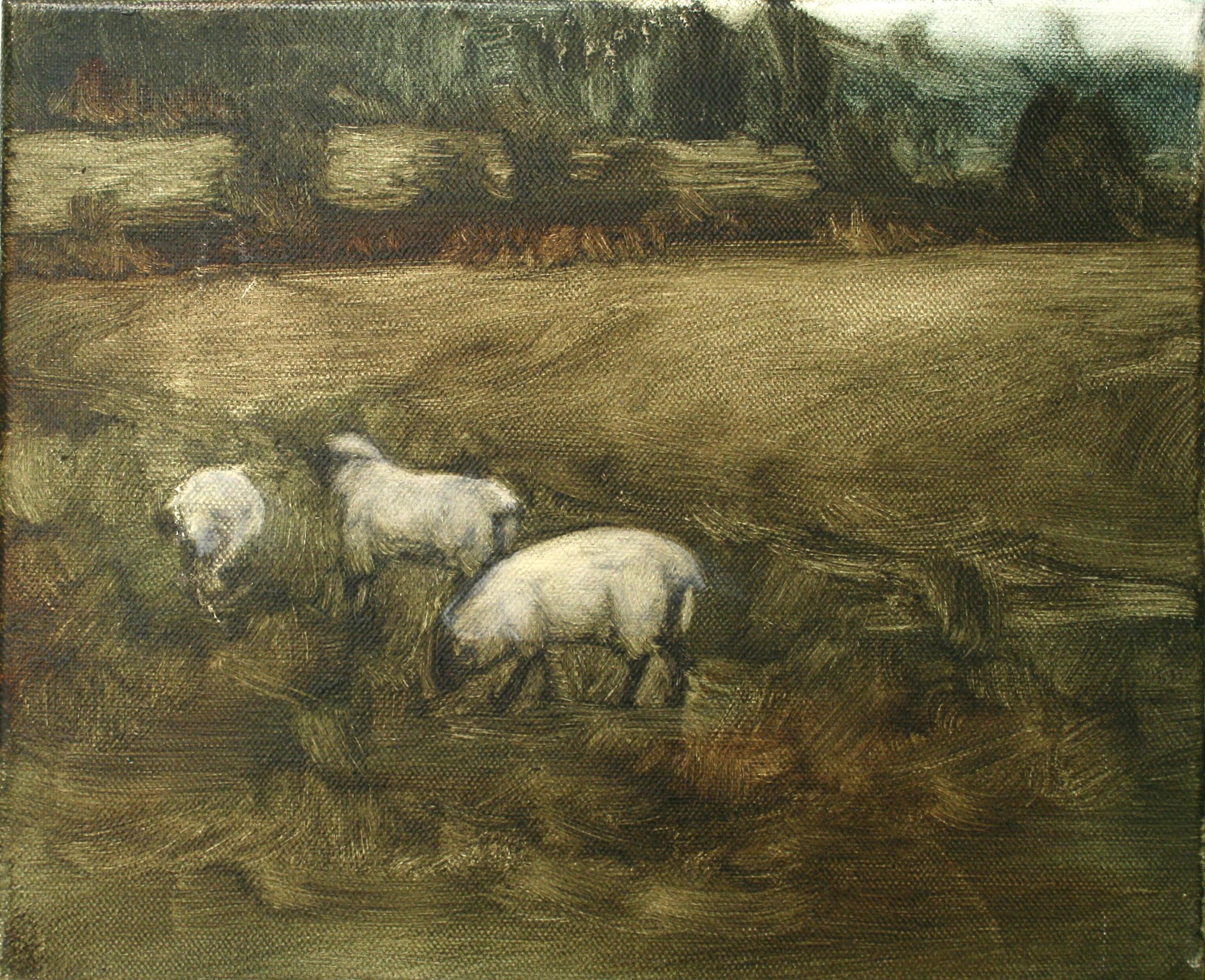 "Sheep Study 2, oil on canvas 30 x 24.5 cm (12"" x 9.5""), 2016"