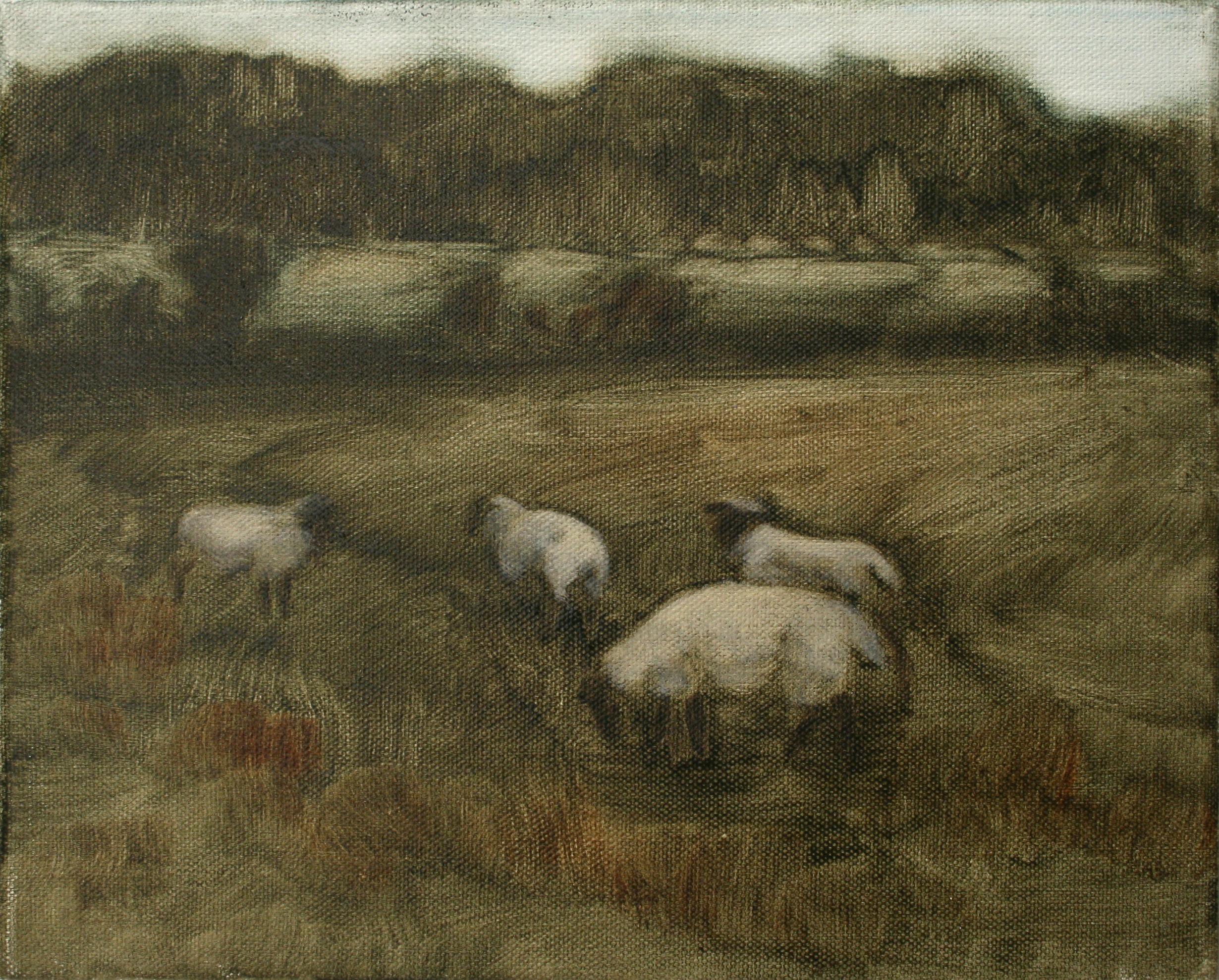 "Sheep Study 5, oil on canvas 30 x 24.5 cm (12"" x 9.5""), 2016"