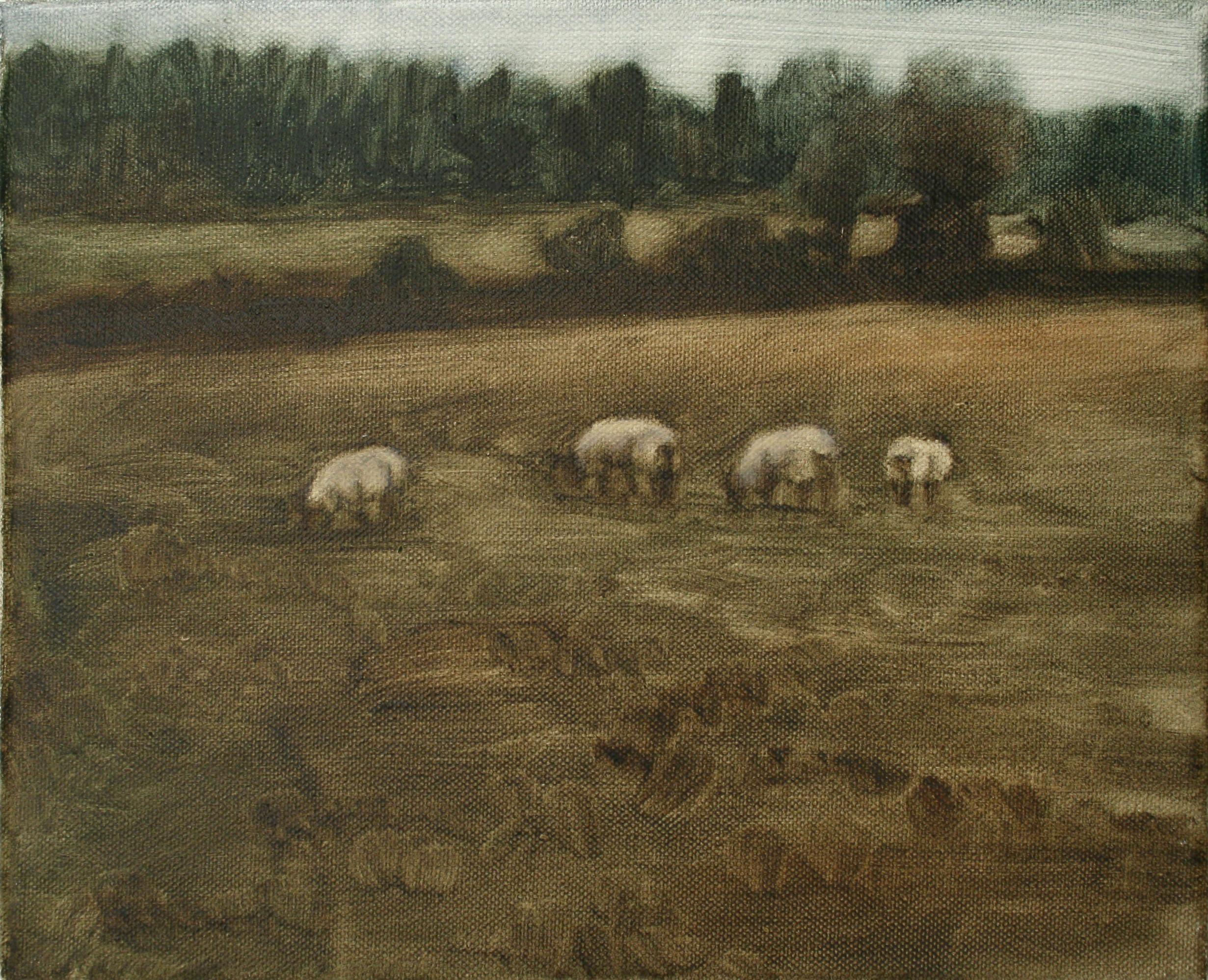 "Sheep Study 9, oil on canvas 30 x 24.5 cm (12"" x 9.5""), 2016"