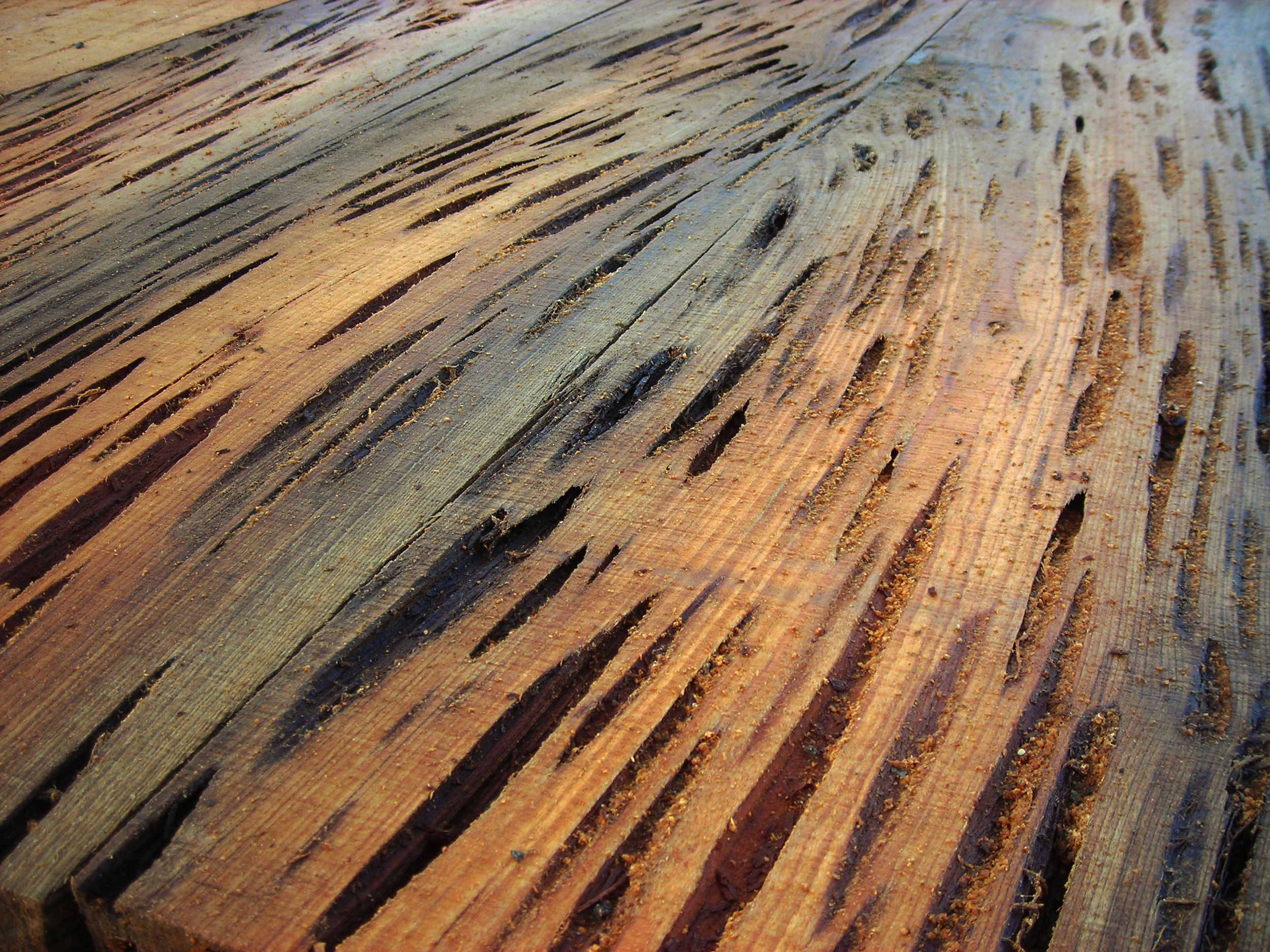 pecky-cypress-1.jpg